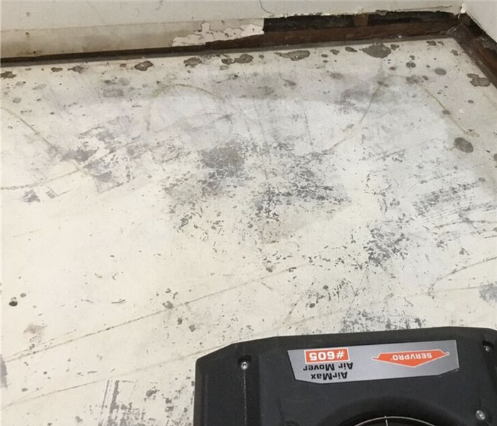 Where are the most likely places to find mold? After