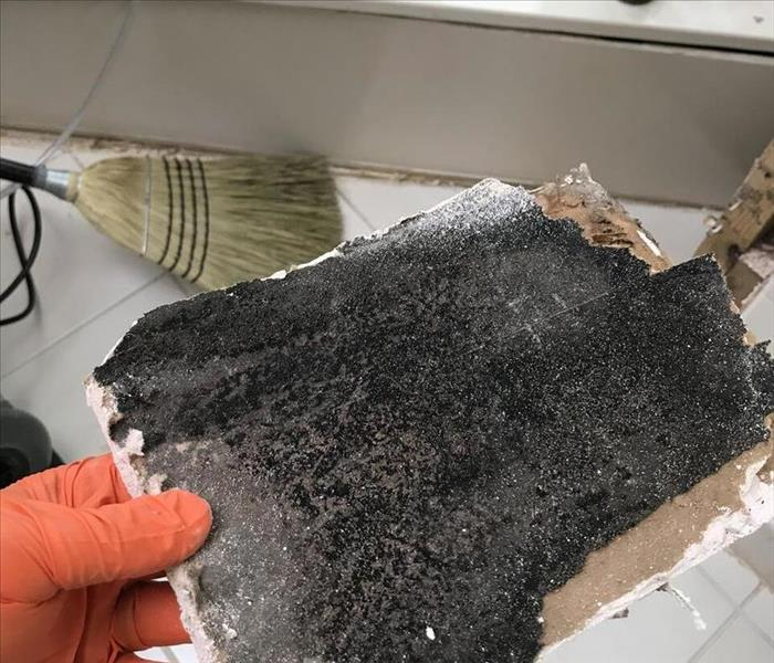 If You Have Mold In Your Home