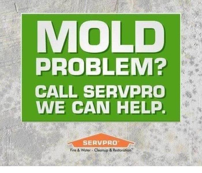 Mold Remediation Stunt Mold Growth In You Home or Business