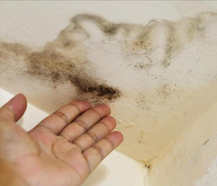 Mold Remediation Your Most Pressing Questions Regarding Mold, Answered